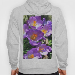 Crocus Flowers - The first Sign of Spring Hoody