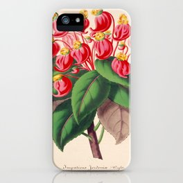 Impatiens gordonii Vintage Botanical Floral Flower Plant Scientific Illustration iPhone Case