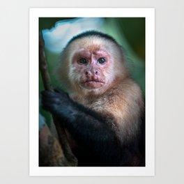 Capuchin Daydream - Cahuita Costa Rica Wildlife Art Print