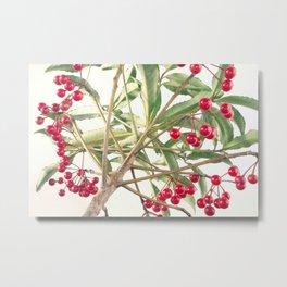 Christmas Berry Metal Print