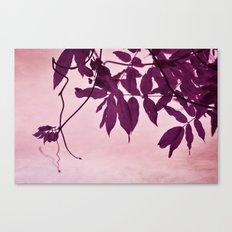 wisteria leaves Canvas Print