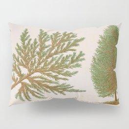 Biota Hybrid Evergreen Vintage Botanical Floral Flower Plant Scientific Pillow Sham
