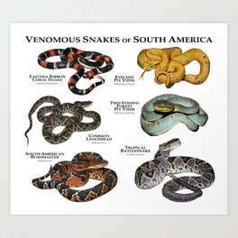 Venomous Snakes of South America Art Print