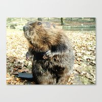 beaver Canvas Prints featuring BEAVER by Sofia Youshi