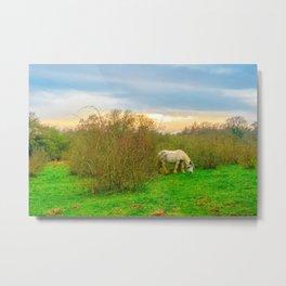 Gypsy Horse Metal Print