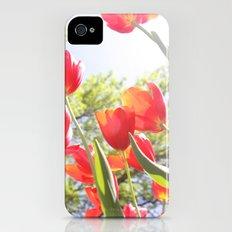 Tiptoe Through The Tulips Slim Case iPhone (4, 4s)