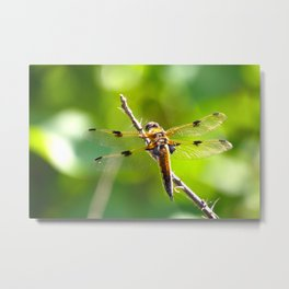 Dragonfly On A Branch Of A Rose #decor #society6 Metal Print