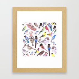 Pet and wild birds of America Framed Art Print