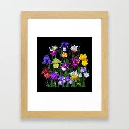 Iris Garden - on black Framed Art Print