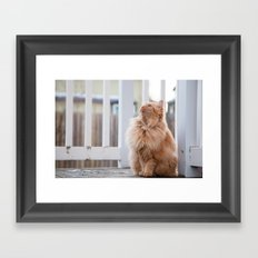 Here kitty Framed Art Print
