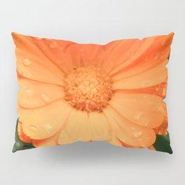 Captivating Calendula Pillow Sham