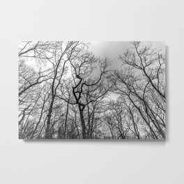 Haunting naked trees, black and white Metal Print