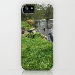Pigeons And Ducks iPhone Case