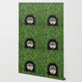 Little Hedgehog in the Hedge Wallpaper