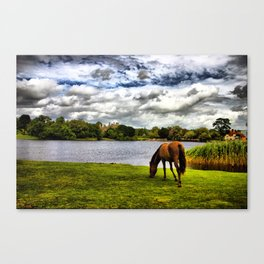 New Forest Pony (HDR) Canvas Print