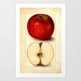Vintage Botanical Apple Art Print