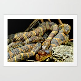 Northern Water Snakes Art Print
