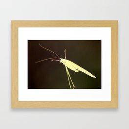 Grashopper Framed Art Print