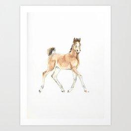 Prancing Foal Art Print