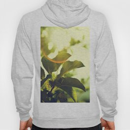 Morning Light Shining Through Branches Of Leaves Nature Photography Hoody