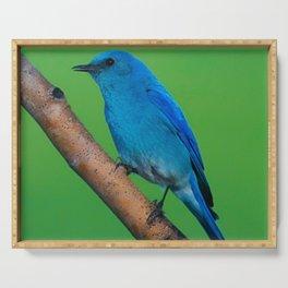 Blue Bird Serving Tray