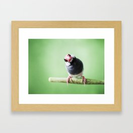 A Finch's Curiosity Framed Art Print
