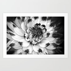 Black and White Dahlia Art Print