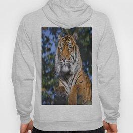 Eye of the tiger Hoody