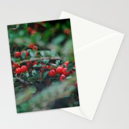 Cotoneaster Berries Stationery Cards