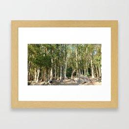 paper bark trees forest Framed Art Print