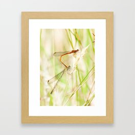 Dragonflies Framed Art Print