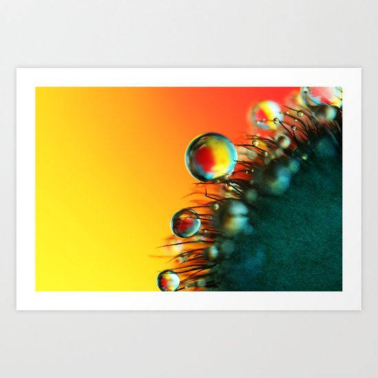 Poppy Drops Art Print