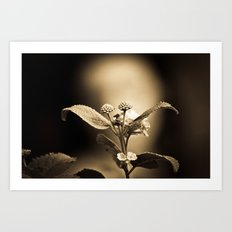 Venus in Flowers Art Print