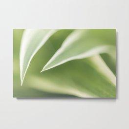 Close up of a Chlorophytum, Macro, Green leaves plant Art Print Metal Print