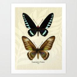 Butterfly16_Trogonoptera Trojana • Pair Art Print