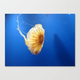 Jellyfish 2 Canvas Print