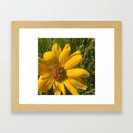 Sunflowermadness Framed Art Print