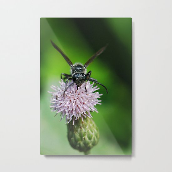 Bee and a flower Metal Print