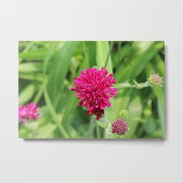 Close Up of Magenta Flower Metal Print