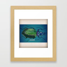 Ground Beetle  Framed Art Print