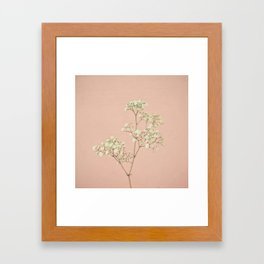 Baby's Breath Framed Art Print