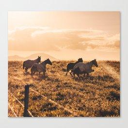 wild horses at dusk Canvas Print