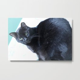 Simon the Black Halloween Sanctuary Cat Metal Print