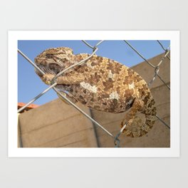 Chameleon In Shades of Brown on Fence Art Print