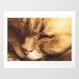 Cat Serenity  Art Print
