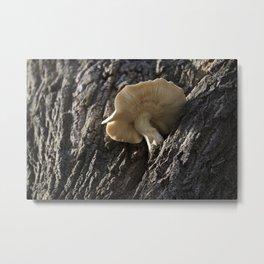 Tree Trunk Mushroom 1 Metal Print