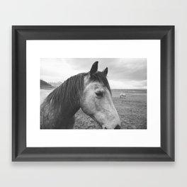 Horse Print in Black and White Framed Art Print