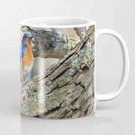 Bluebird in Tree Coffee Mug