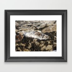 Farne Island Seals Framed Art Print