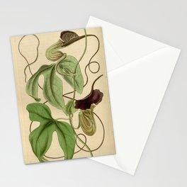 Flower 3769 aristolochia caudata Livid flowered Birth wort1 Stationery Cards